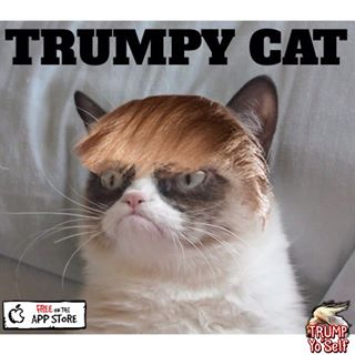 Cats Trump