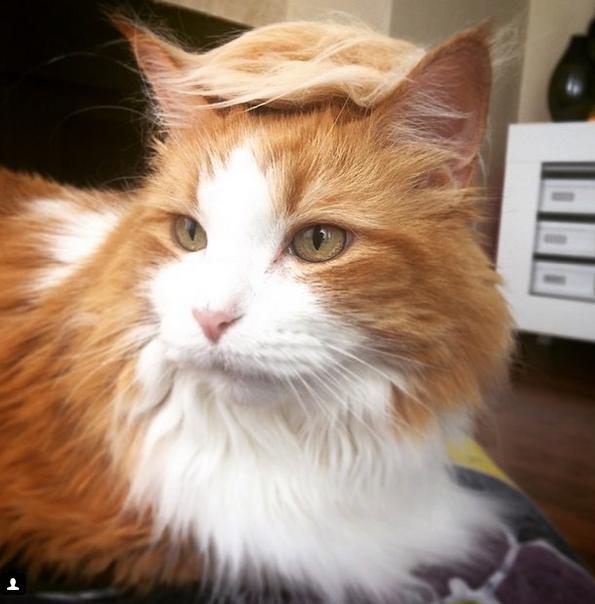 Cats Trump1