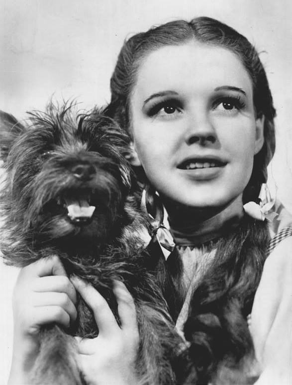 dorthy-and-toto